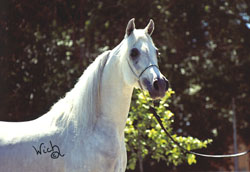 Farres - reference sire